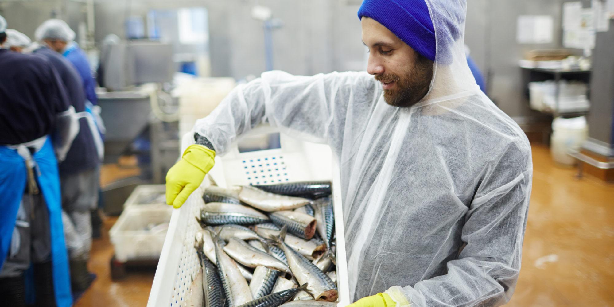 Fisch Titelbild