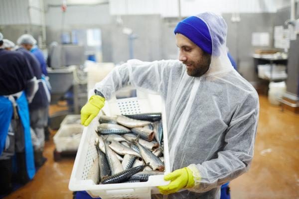 Fisch Vorschaubild